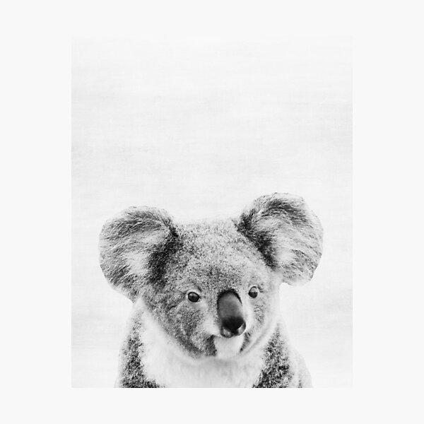 Koala Photographic Print