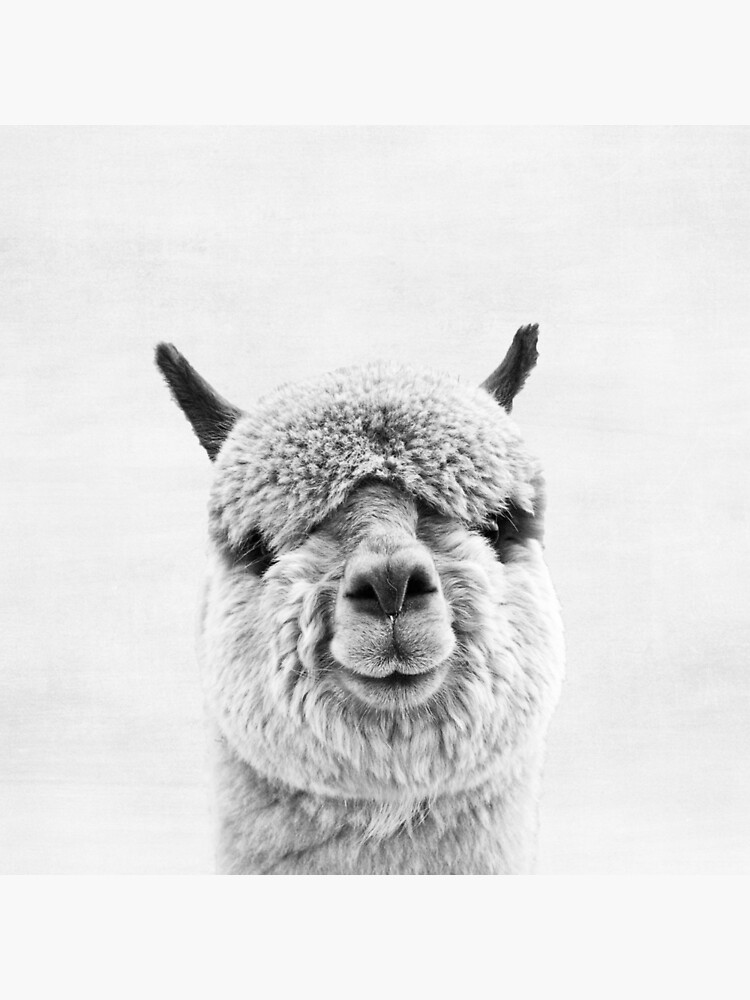 Alpaca by juliaemelian