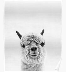 Alpaka Poster