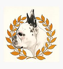 French Bulldog - @french_alice Photographic Print