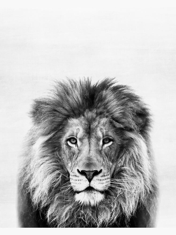 Lion by juliaemelian