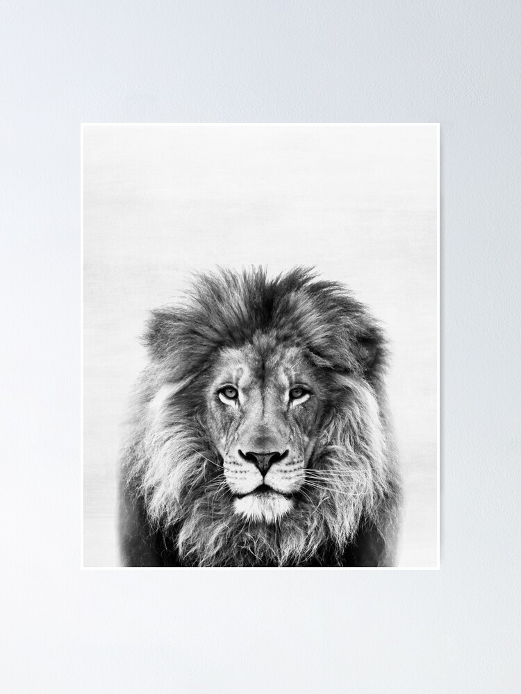 Alternate view of Lion Poster