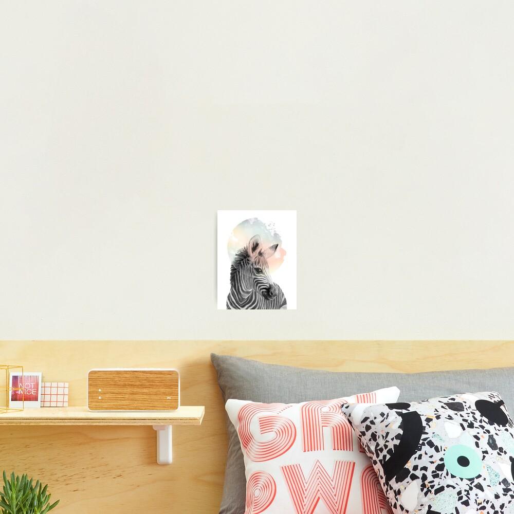 Zebra // Dreaming Photographic Print