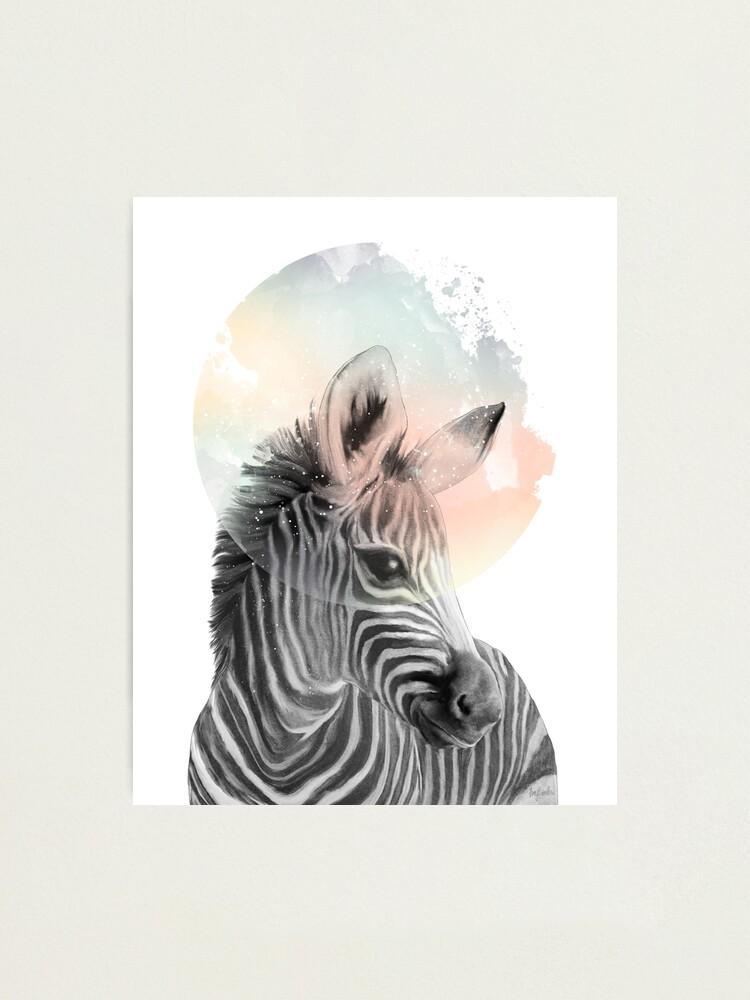 Alternate view of Zebra // Dreaming Photographic Print