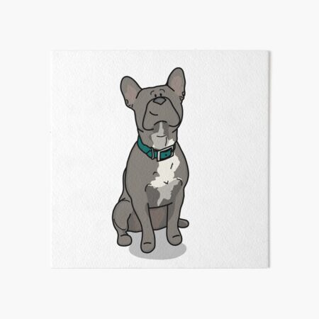 French bulldog with a turquoise collar Art Board Print