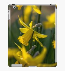 Lovely Daffodils iPad Case/Skin