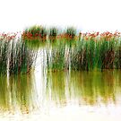 Reeds in the Lake by aussiedi