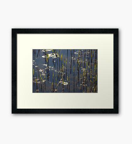 New Reed Framed Print