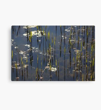 New Reed Canvas Print
