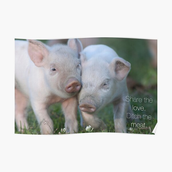 Cute Piglets Poster for Vegans/Vegetarians Poster