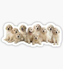 Golden Puppies Sticker