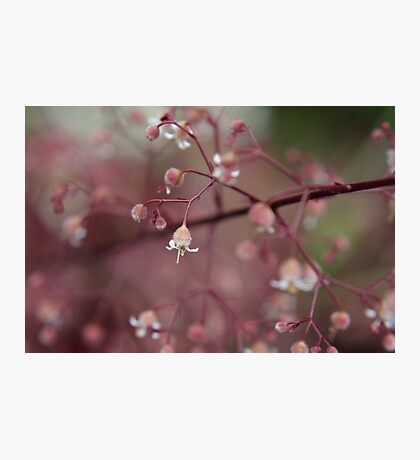 Dusk pink Photographic Print