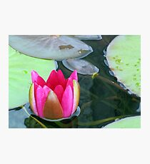 Beauty Unfolding - Vibrant Pink Water Lily Bud Photographic Print