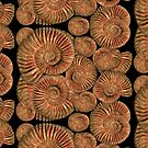 Ammonites by Ivy Izzard