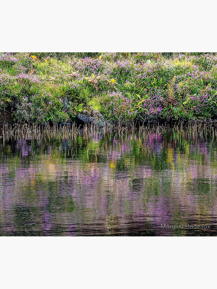 Monet's Heather by MarylouBadeaux