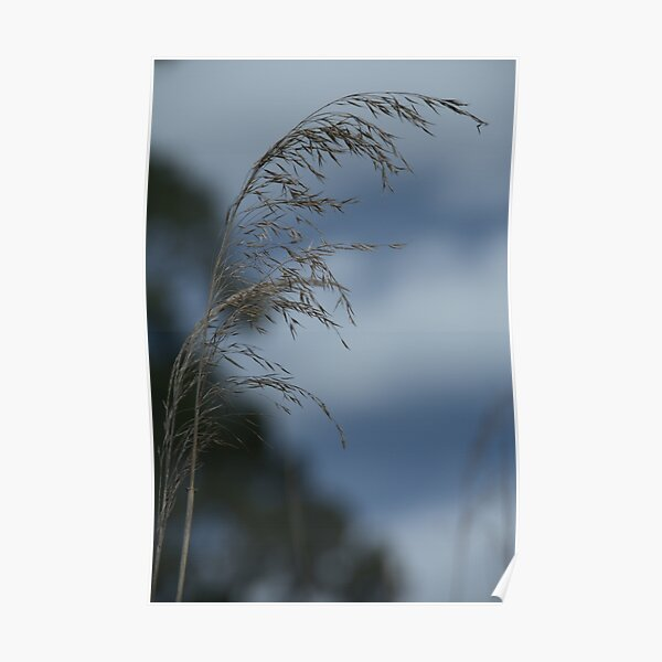 A reed in the wind Poster