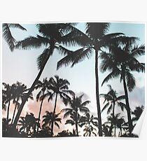 Palmen Sonnenuntergang Poster
