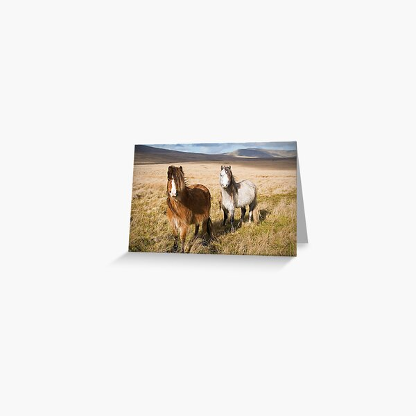 Welsh Mountain Ponies in the Brecon Beacons Greeting Card