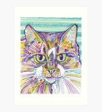 Maine Coon cat drawing - 2016 Art Print