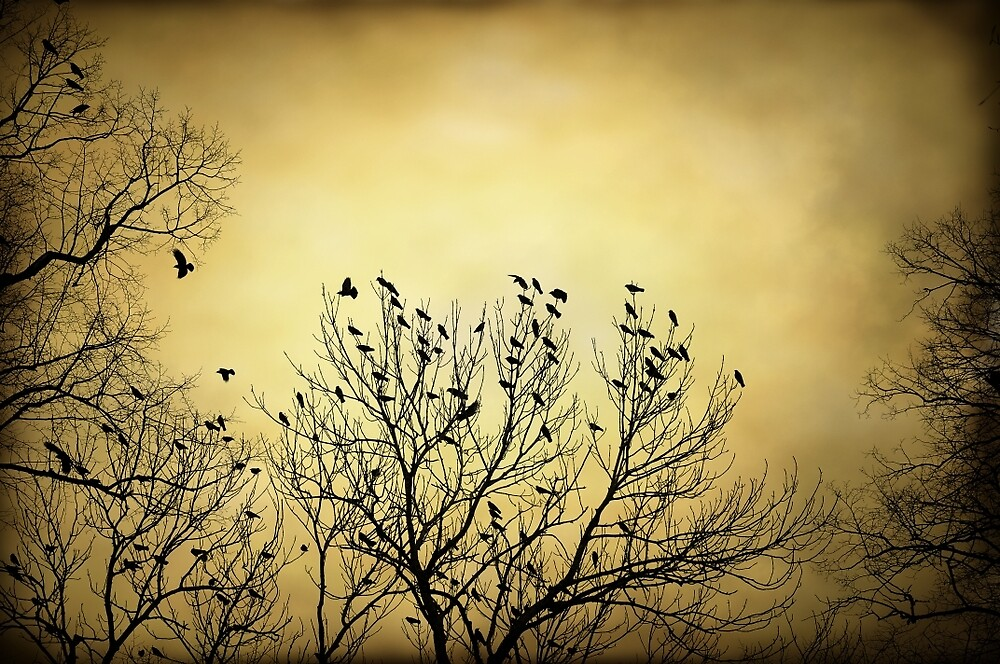 Silhouette of crows by Anki Hoglund