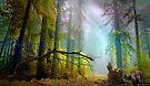 Misty Trail by Igor Zenin