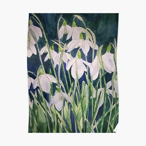 Snowdrops watercolour painting  Poster