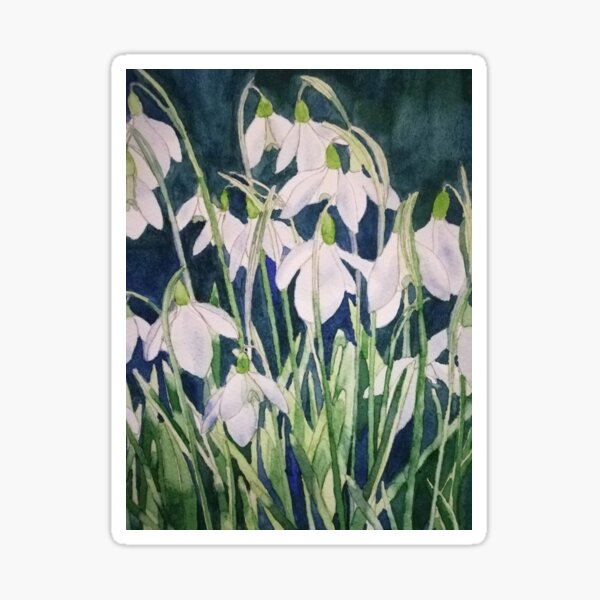 Snowdrops watercolour painting  Sticker