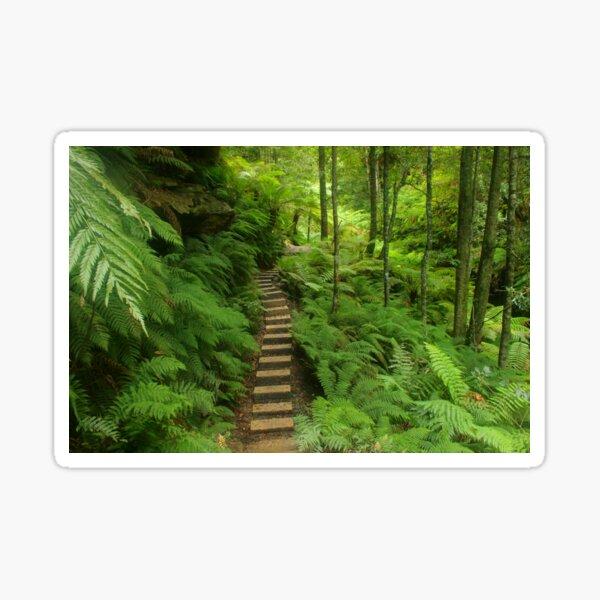 Pathway of ferns Sticker