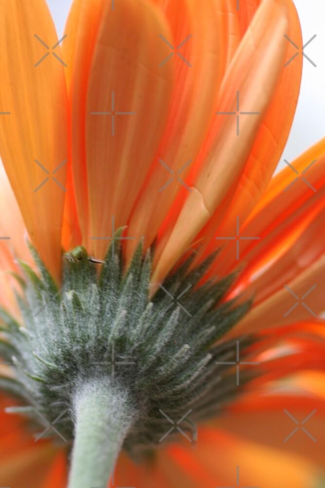 Bright Orange by Joy Watson