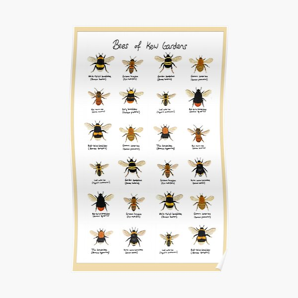 Bees of Kew Gardens Chart Poster