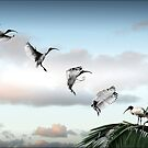make way! (ibis landing sequence) by carol brandt