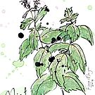 Culinary Herbs - Mint by wherefishsing
