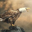 Call of the wild by Brian Tarr