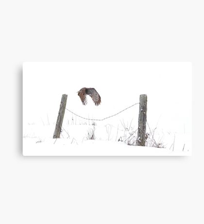 Post to Post - Great grey owl Canvas Print