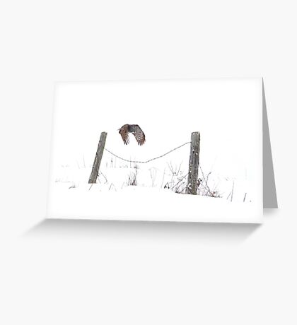 Post to Post - Great grey owl Greeting Card