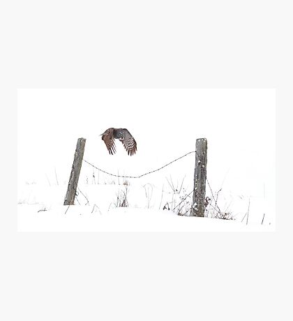 Post to Post - Great grey owl Photographic Print
