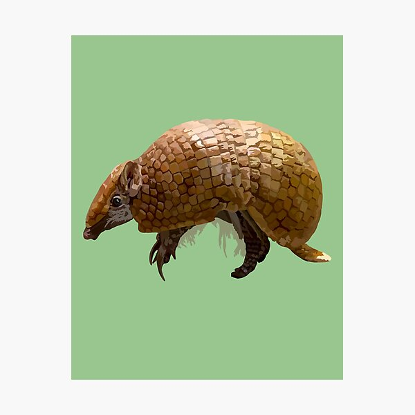 T is for Three banded armadillo  Photographic Print