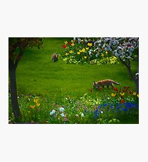 Garden Foxlings Photographic Print