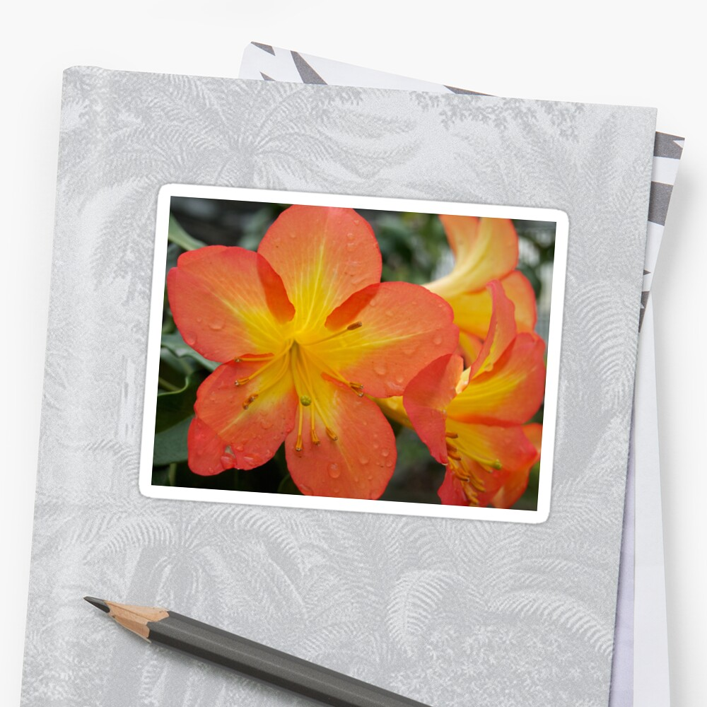 Rhododendron Splendor with Raindrops from A Gardener's Notebook Sticker