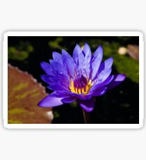 Upbeat Violet Elegance - the Beauty of Waterlilies Sticker