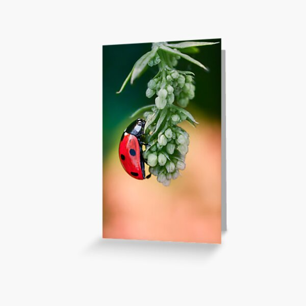 Ladybug hanging on a green flower branch. Photographed from side Greeting Card