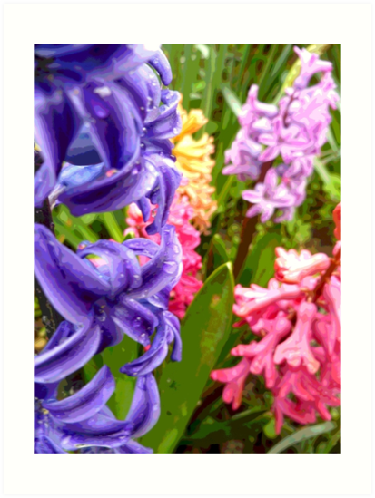 Colourful Flowers by Vicki Spindler (VHS Photography)