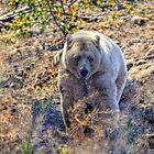 Spirit of the Bear I by Skye Ryan-Evans