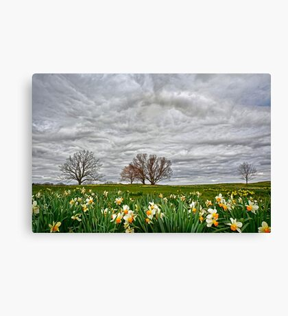 Almost Spring! Canvas Print