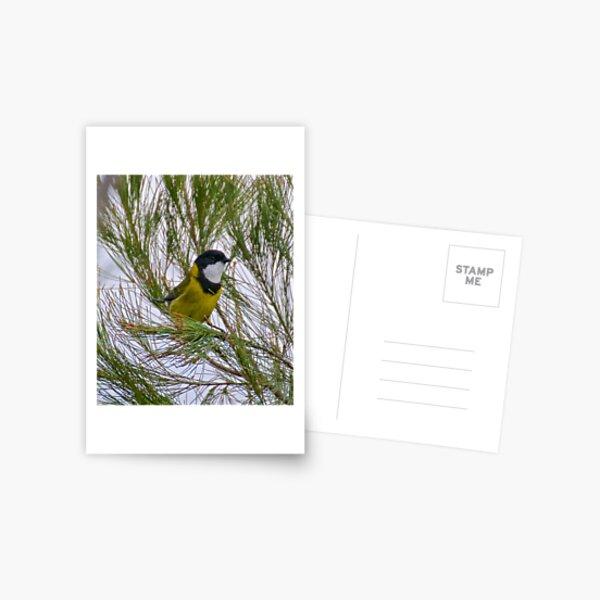 WHISTLER ~ Golden Whistler LPSBFXRC by David Irwin Postcard