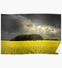 Canola and storm clouds Poster