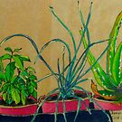plants in pots  by Evelyn Bach