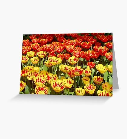 Red with Yellow and Yellow with Red Greeting Card