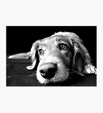 Lazy Dog Day Photographic Print