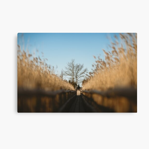 Early Morning in Swamp, Europe Travel Canvas Print